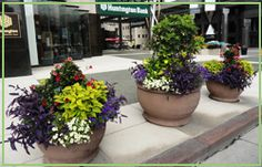 Seasonal potted planters in downtown Columbus- Streetscapes Galvanized Planters, Moss Wall, Interior Plants, Plant Wall, Second Floor, Indoor Plants, Pots, Street Art, Succulents