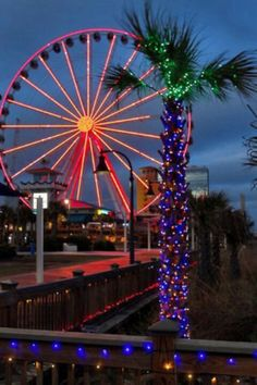 Best Christmas events in Myrtle Beach SC Christmas Palm Tree, Christmas Events, Beach Christmas, Coastal Christmas, Christmas Vacation, Christmas Lights, Christmas Time, Xmas, Myrtle Beach South Carolina