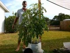 Check Out This Amazing Plant Growth Using Custom Made Mesh Bags! Self Wa. Growing Plants, Growing Vegetables, Container Gardening, Gardening Tips, Gutter Garden, Mesh Bags, Grow Bags, Bottle Garden, Self Watering