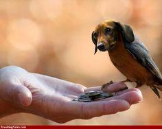The elusive Dachshund bird