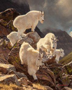Dustin Van Wechel, Boulder Hopping, oil, 30 x - Southwest Art Magazine Zoo Animals, Funny Animals, Cute Animals, Wild Animals, Cool Paintings, Animal Paintings, Artist Painting, Painting & Drawing, Goat Art