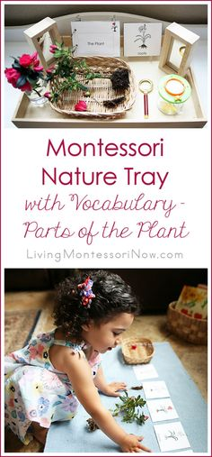 With toddlers and preschoolers, go on a nature walk to prepare a Montessori nature tray with vocabulary for parts of the plant.