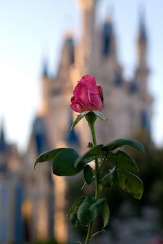Cinderella's castle in the background / bokeh photography / disney style But in Belle's Castle