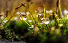 Free Image on Pixabay - Moss, Drip, Water, Nature, Green Nature Images, Hd Images, Free Images, Permaculture, Free Pictures, Free Photos, Logo Design Trends, Bokeh, Dandelion