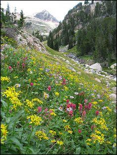 Montana....beautiful!    Beat you to the top!!!