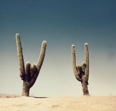 We like to drive out to the desert and listen to old Hair Band Rock music.  Evidently, the desert likes it too.... ~~  Houston Foodlovers Book Club