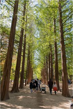 Nami Island // SEOUL, SOUTH KOREA