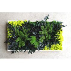 Le Cadre végétal Green est un cadre végétal stabilisé rectangulaire Aucun besoin deau, ni de soleil et dentretien 100% naturel
