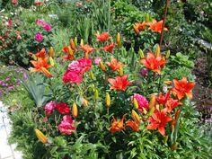 Roses and lilium