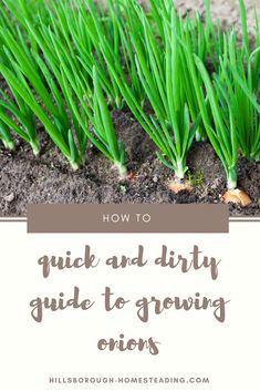 Quick and dirty 30 second guide to growing onions. How to grow onions in your own vegetable garden. Everything you need to know from soil pH, hours of sunlight, companion plants, etc. | Hillsborough Homesteading