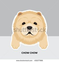 Vector Illustration Portrait of Chow chow Puppy. Dog isolated
