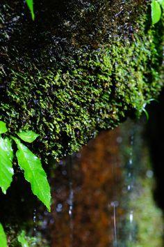 苔を伝う山の水