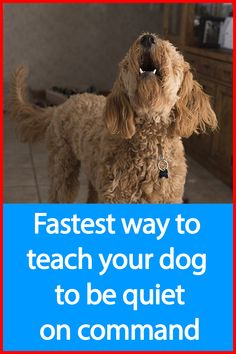 """Develops your Dog's """"Hidden Intelligence"""" To eliminate bad behavior and Create the obedient, well-behaved pet of your dreams. Pet Dogs, Dogs And Puppies, Dog Cat, Pets, Doggies, Dog Care Tips, Dog Barking, Service Dogs, Dog Behavior"""