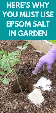 Garden Ideas Budget Backyard, Garden Ideas To Make, Diy Garden Projects, Garden Planning, Garden Soil, Garden Care, Lawn And Garden, Allotment Gardening, Garden Shrubs