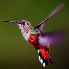 It's hummingbird season