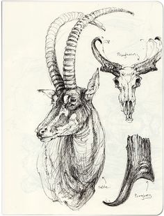 animales Woman T-shirts may woman t shirt Animal Sketches, Animal Drawings, Art Drawings, Ink Illustrations, Illustration Sketches, Game Design, Animals With Horns, Nature Drawing, Tutorials