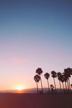 sunset / venice beach california / palm trees / summer sky