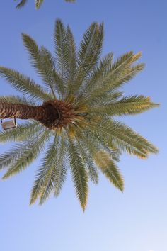 Palm Tree in Palm Springs...  Another great day trip.