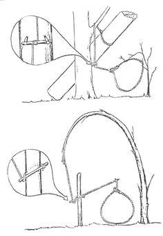 Resultado de imagen para trampas de caza supervivencia