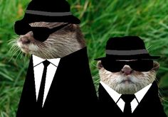 Blues Brothers otters