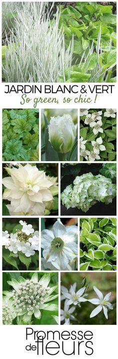 Marier le blanc et le vert au jardin, un tendance très actuelle, très chic !