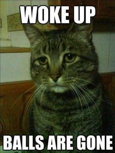 Funny Cat Memes With Captions Never Fail To Make Us LOL