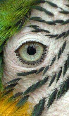 Parrot's Eye by Munia Elena