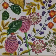 Millie Marotta Border Embroidery, Curious Creatures, Coloring Book Pages, Beautiful Birds, Colorful Interiors, Color Inspiration, Pallets, Zentangle, Flowers