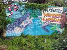 For more than 76 years visitors have enjoyed seeing the largest collection of Florida wildlife including panthers, deer, wild boar, snakes and alligators. Home of Big Joe II, a 12 foot American crocodile. Each hour-long guided tour features alligator feedings.  Open 9 a.m. to 5 p.m. daily.