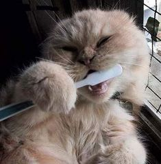 Chunk takes his dental hygiene seriously...