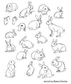 Bunny Sketches, Animal Sketches, Animal Drawings, Cute Drawings, Drawing Sketches, Raccoon Drawing, Rabbit Drawing, Rabbit Art, Bunny Tattoos