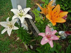 Propergate by division : day lily, daisies, coneflower, yarrow, black-eyed susan, mint, sage, bleeding heart, lupines are a selection