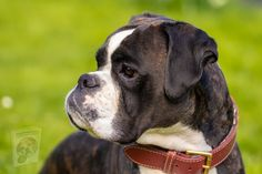 Best Friends Animal Shelter, Dog Information, Boxer Puppies, Two Dogs, Training Your Puppy, Dog Barking, Dog Quotes, New Puppy, Cute Photos