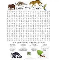 Rainforest Games and Worksheet Activities | The Rainforest Foundation (Amazon Rainforest only)