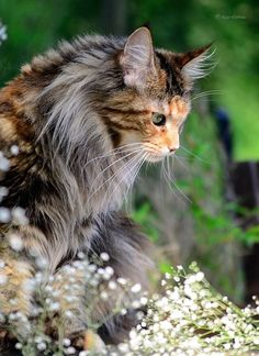 beautiful cat.