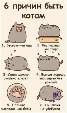 6 причин быть котом. Обсуждение на LiveInternet - Российский Сервис Онлайн-Дневников