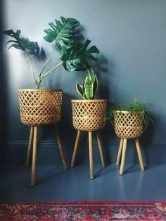 Bamboo Plants, Potted Plants, Indoor Plants, Rattan Planters, Planter Pots, Planter Ideas, Diy Plant Stand, Plant Stands, Plant Decor
