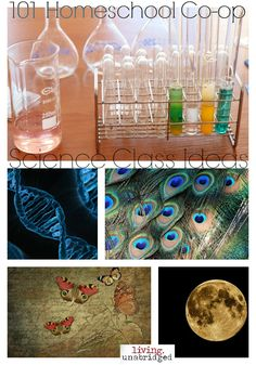 homeschool science class ideas