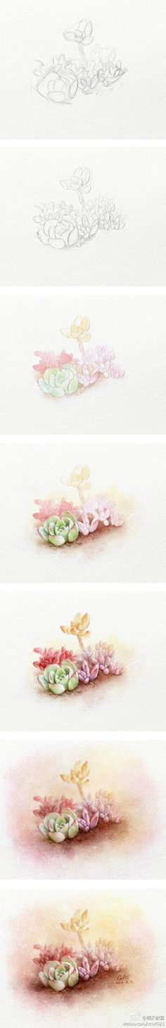 Colored pencil drawing of succulents, step by step tutorial.