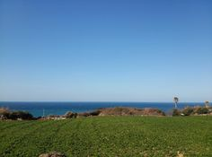 Brocoli farm