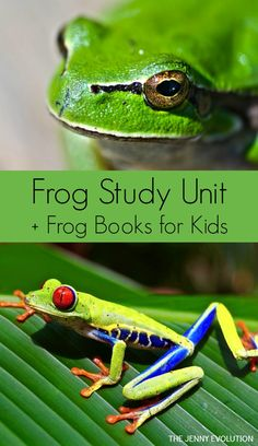 FREE Frog Study Unit + Children's Books Featuring Frogs