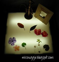 Exploring Light & Shadow (Reggio) Laminated flowers and leaves