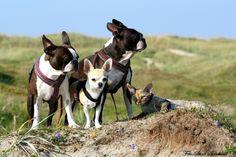 På strandtur med gjengen:)