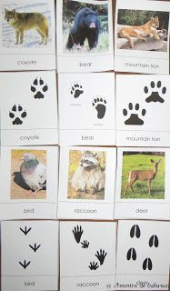 Montessori cards for animal tracks and the animals that made them.