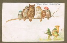 Owls Frogs Walla Walla Washington 1880`s Trade Card | eBay
