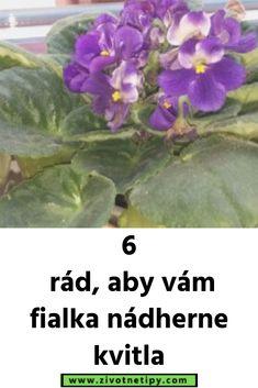 6 rád, aby vám fialka nádherne kvitla Plants, Flora, Plant, Planting