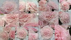 zelf papieren bloemen maken van koffiefilters! website meteencreatievelabel