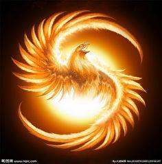 Phoenix Bird | 凤凰