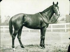 Gallant Fox, second triple crown winner. He was the only triple crown winner to produce a triple crown winner in Omaha.