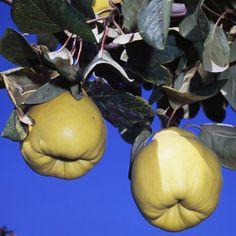 143346_2 Eggplant, Onion, Pear, Herbs, Vegetables, Fruit, Health, Garden, Alternative